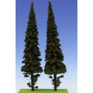 Spruce with short trunk 300mm (2x)